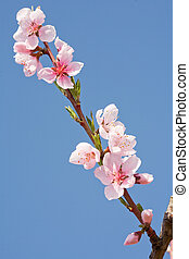 Beautiful spring flowers with clear blue sky.
