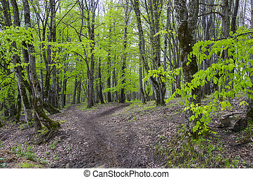 Beautiful spring forest in Adygea