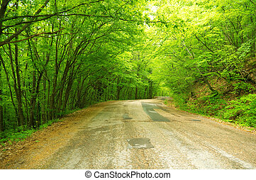 Beautiful spring forest road winds in the mountains.
