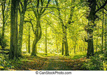 Beautiful Spring in the forest, bright green leaves and a road