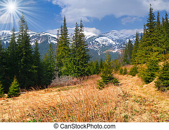 Beautiful spring landscape in the Carpathian mountains