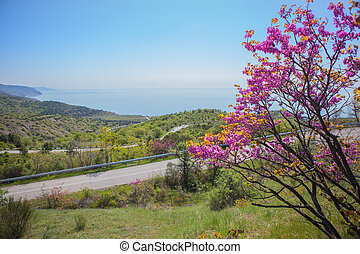 landscape with a blossoming tree, road by the sea