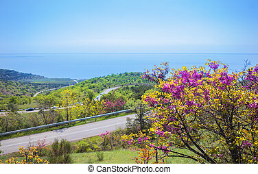 spring landscape with a blossoming tree, road by the sea