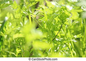 Fresh green spring grass