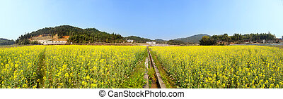 Beautiful spring panoramic  landscape shot with blooming canola flower and ditch in field