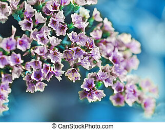 Beautiful spring pink blossoms against a green background with
