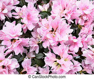 Beautiful spring pink flowers