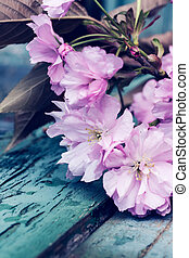 Beautiful, Spring, rustic background with pink, Japanese...
