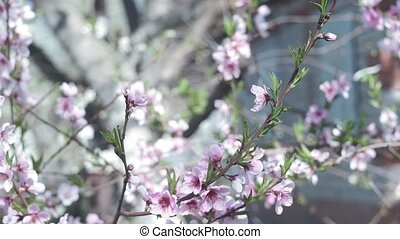 Beautiful spring sunny floral backround. Closeup view of ...