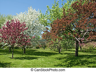 Beautiful spring trees in bloom - Spring garden. Beautiful ...