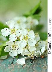 Beautiful spring white flowers
