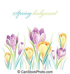 springs tulips - beautiful  springs tulips