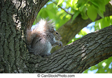 Beautiful Squirrel Sitting in a Tree