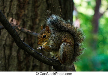 Beautiful squirrel sitting on a branch in the park.
