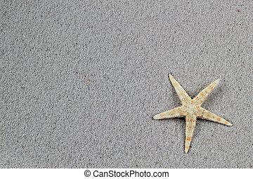 Beautiful starfish on the beach