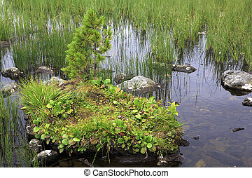 Beautiful stone with plants in a mountain lake Karakol.