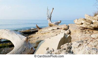 Beautiful stony coast of the Black Sea with an old dry snag....