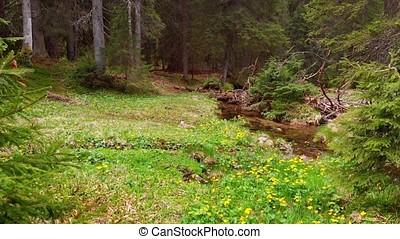 Beautiful streams flow into river Brebeneskul, Ukrainian...