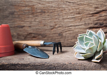 Beautiful succulent with garden tools on wooden table