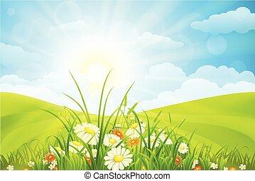 Beautiful summer background
