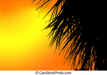Beautiful summer background with a silhouette