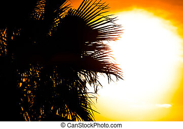Beautiful summer background with the silhouette of a palm, tree