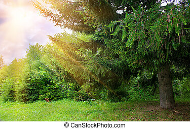 summer forest illuminated by the sun