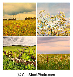 Beautiful summer in the fields, collage