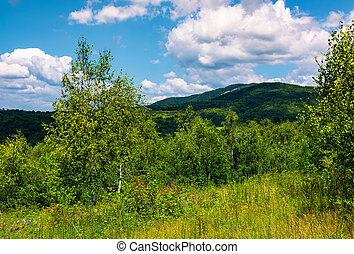 beautiful summer landscape in mountains. grassy meadow among...