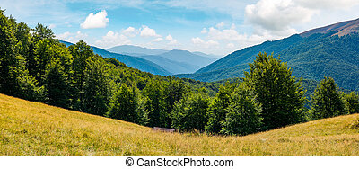 beautiful summer landscape in mountains. perfect countryside...