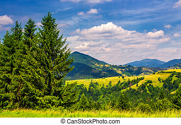 beautiful summer landscape in mountains. tall spruce trees...