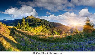 Beautiful summer landscape in the Carpathian mountains.