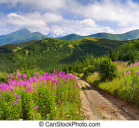 Beautiful summer landscape in the mountains