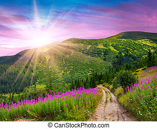 Beautiful summer landscape in the mountains with pink flowers. Sunrise