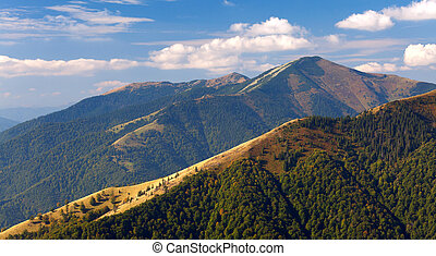 Beautiful summer landscape in the Carpathian mountains....