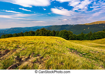 beautiful summer landscape of Carpathians. grassy slopes and...