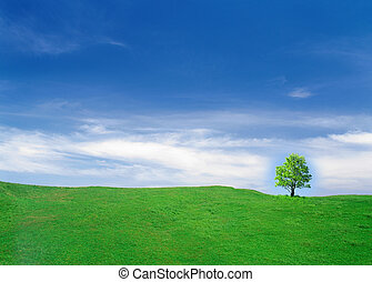 Beautiful summer landscape.