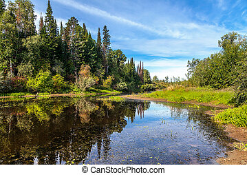 Beautiful summer landscape with a forest lake
