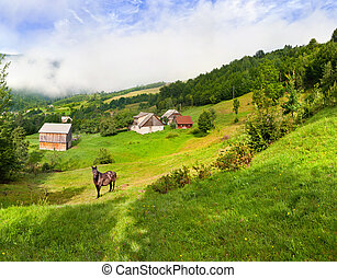 Beautiful summer landscape with a horse in the village in mountains
