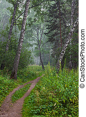 Beautiful summer landscape with forest