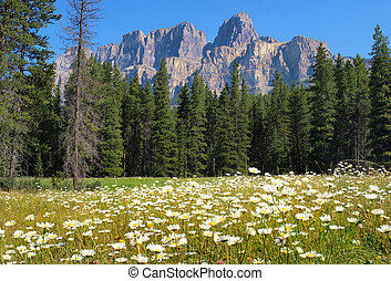 Beautiful summer landscape with Rocky Mountains