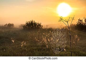 summer landscape with sunrise and fog