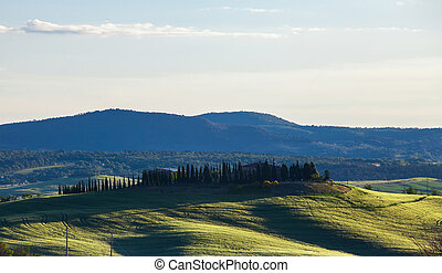 Beautiful summer landscape with the cypress avenue, Tuscany...