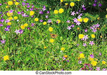 summer meadow with flowers and a butterfly