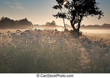 summer misty sunrise on meadow