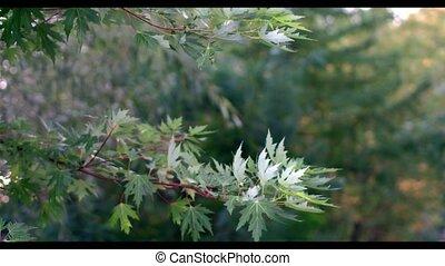 Beautiful Summer Nature-Green Trees of Warm Season
