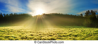 summer rural landscape with sunrise on a meadow, forest and fog, panorama