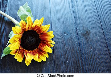 Beautiful summer sunflowers on brown background
