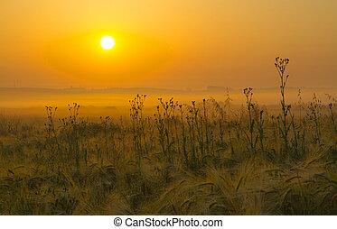 Beautiful summer sunrise