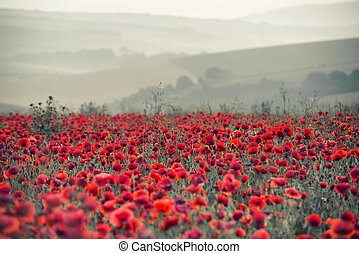 Beautiful Summer sunrise countryside field of poppies landscape with differential focus and shallow depth of field